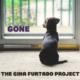 The Gina Furtado Project, banjo, bluegrass, Syntax Creative - image